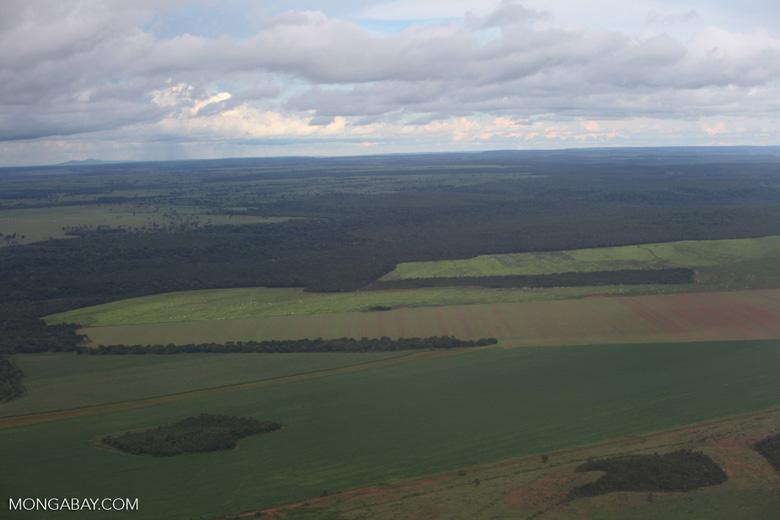 Amazon rainforest and cattle pasture [brazil_0512]