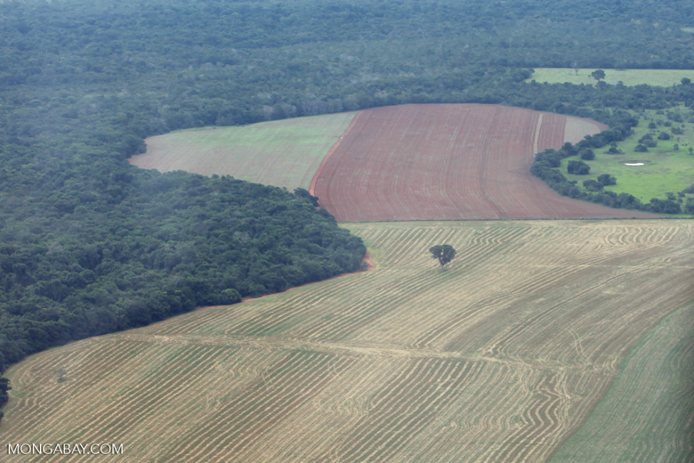 Amazon rainforest and cattle pasture [brazil_0515]