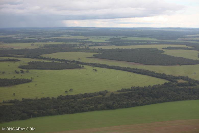 Amazon rainforest and cattle pasture [brazil_0516]