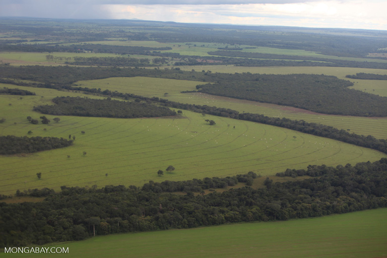 Amazon rainforest and cattle pasture [brazil_0517]