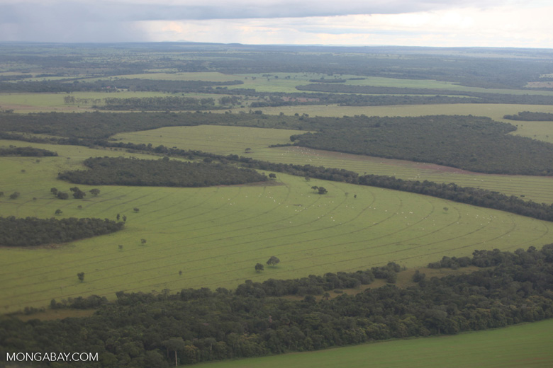 Amazon rainforest and cattle pasture [brazil_0518]