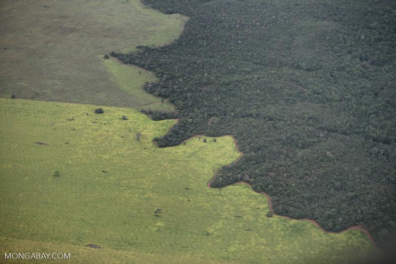 Amazon rainforest and cattle pasture [brazil_0524]