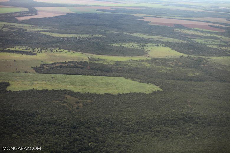Amazon rainforest and cattle pasture [brazil_0526]