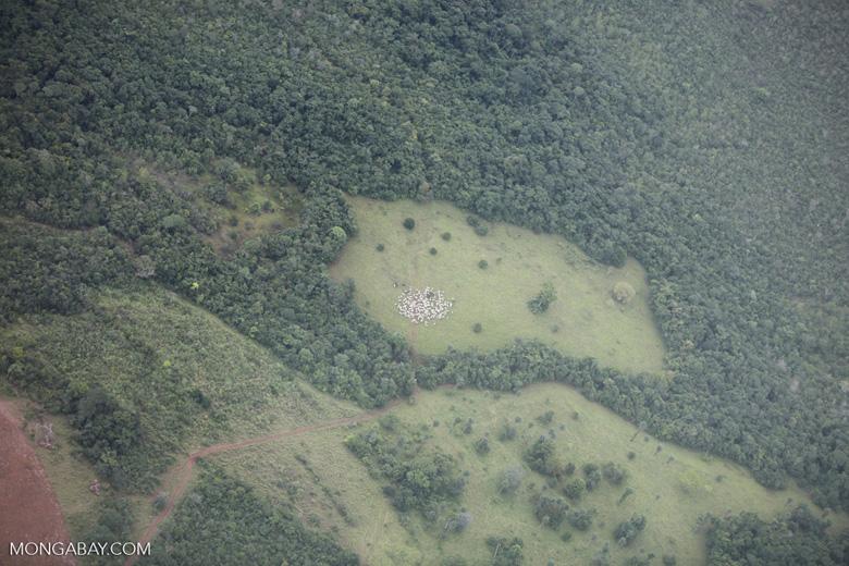 Amazon rainforest and cattle pasture [brazil_0527]