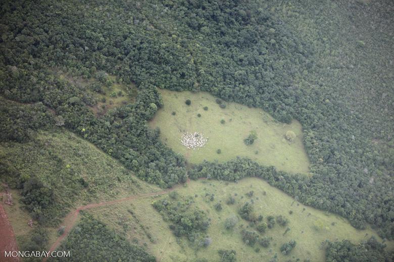 Amazon rainforest and cattle pasture [brazil_0528]