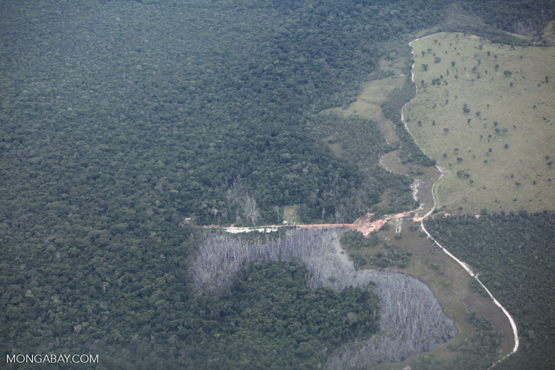 Forest damaged by flooding from a small dam established to provide a water supply for cattle'