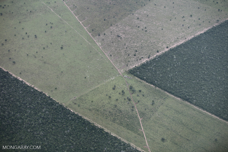 Geometric patterns of deforestation