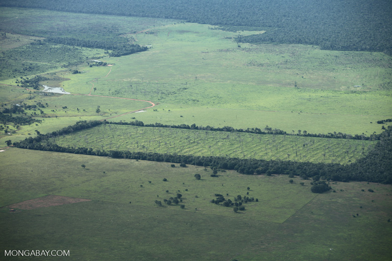 Newly cleared section of Amazon forest