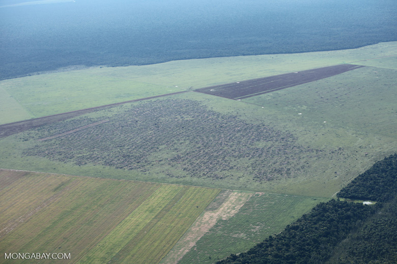 Extensive clearing in the Brazilian Amazon