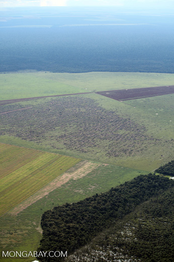 Cattle pasture and Amazon forest
