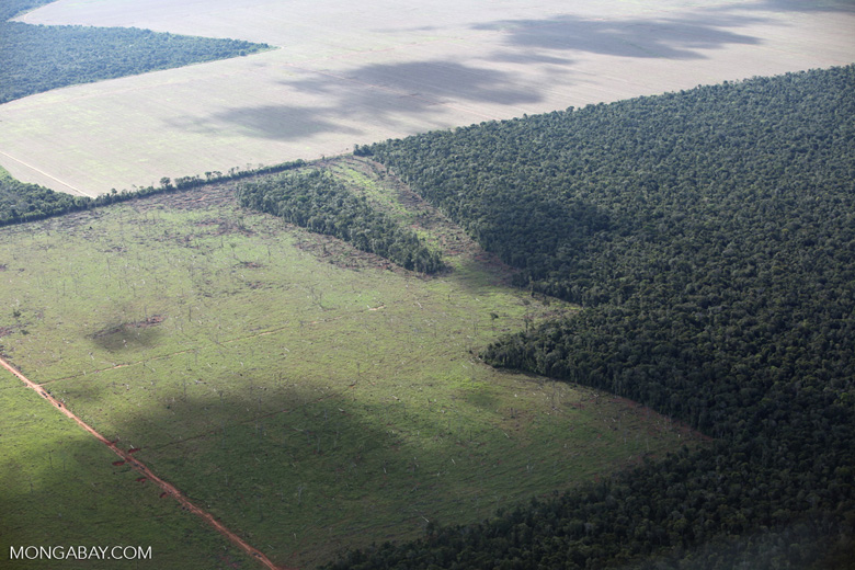 Cattle pasture and Amazon forest [brazil_0597]