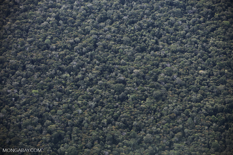 Degraded transition forest n a legal forest reserve