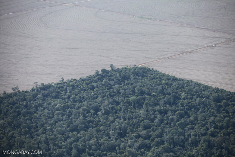 Edge of a forest reserve bordered by agricutural land in the Brazilian Amazon