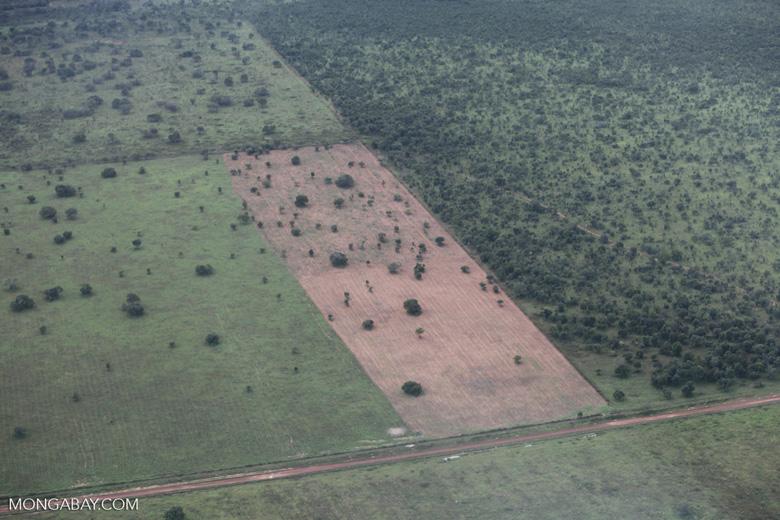 Ranchland and cerrado