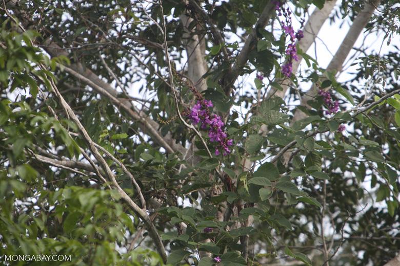 Purple flowers [brazil_0922]