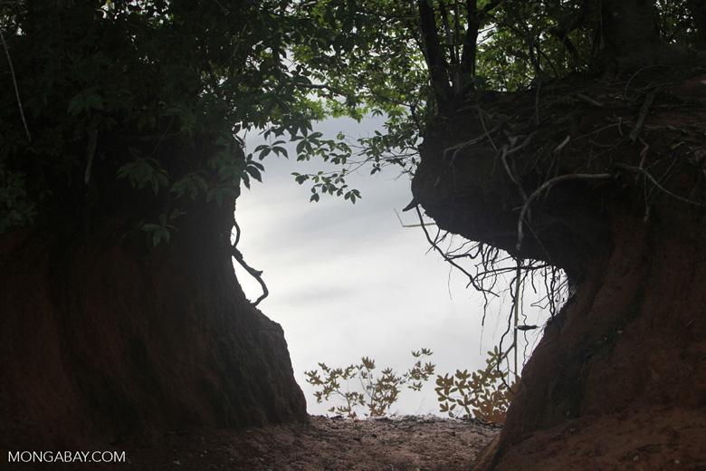 Forest beach along the Rio das Mortes