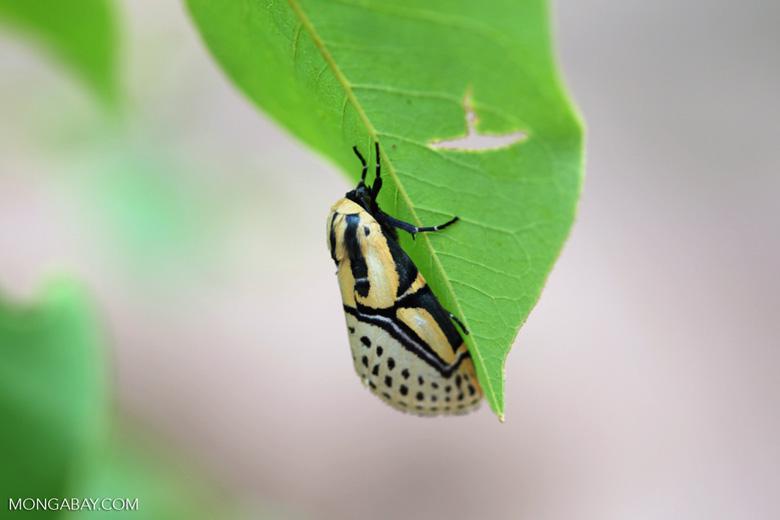 Yellow, white, and black moth