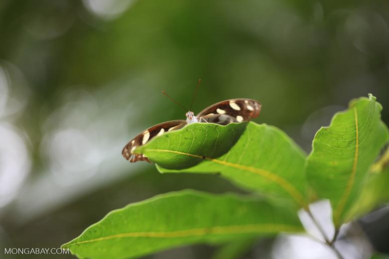 Butterfly peeking over a leaf
