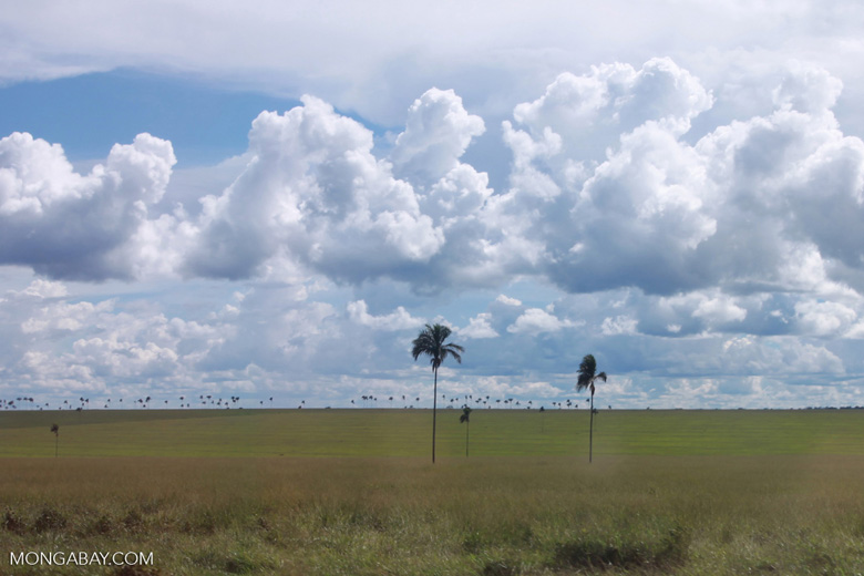 Deforested plain in the Amazon, now used for cattle