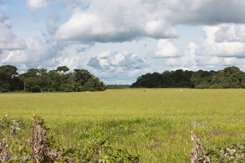 Grass and forest islands in the Pantanal