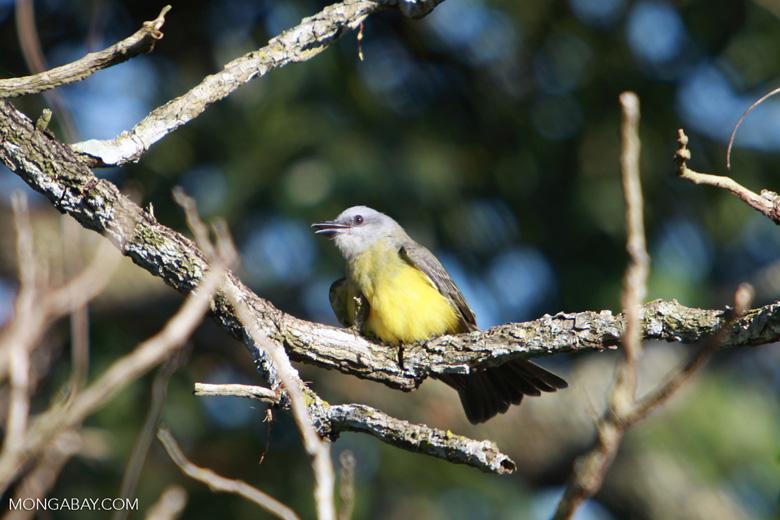 Bird [brazil_1540]