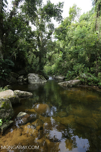 Stream in the Mata Atlantica