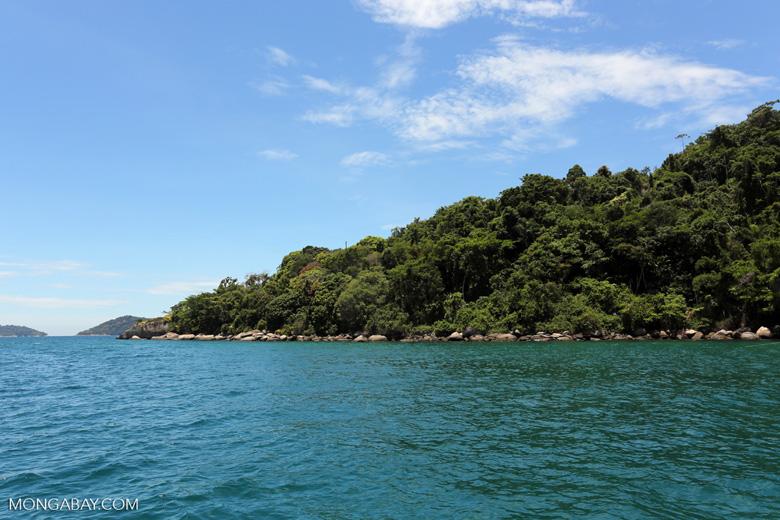 Rainforest near Paraty [brazil_154703]