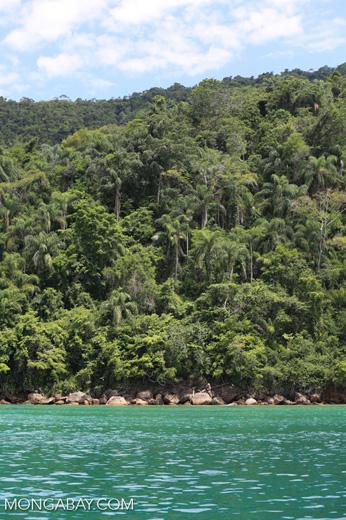 Atlantic rainforest in Brazil [brazil_154734]