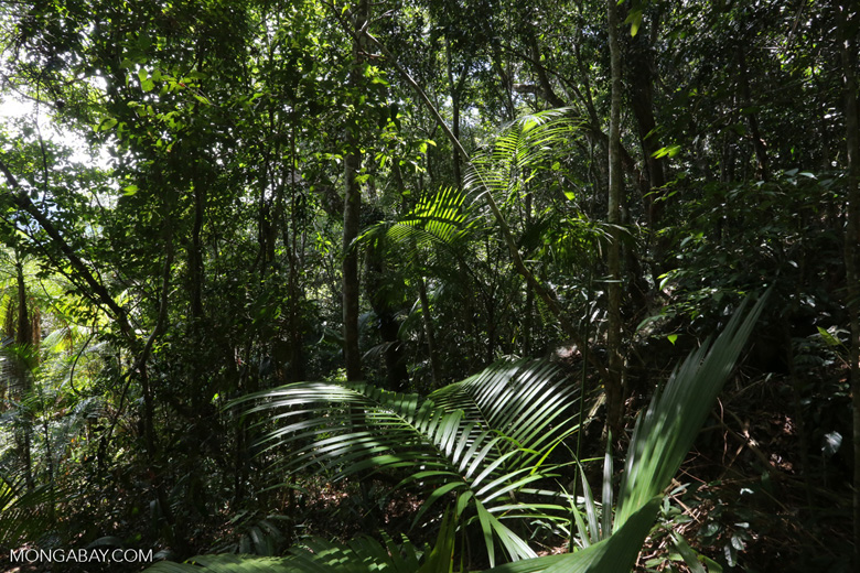 Rainforest on Saco do Mamanguá