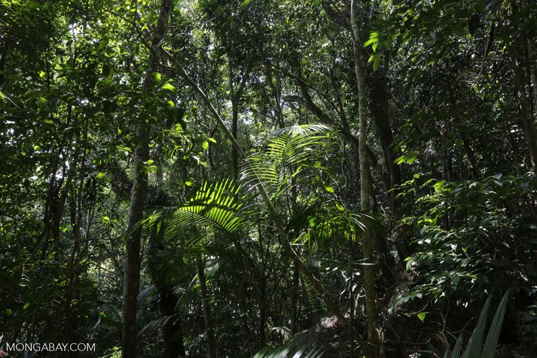 Rainforest on Saco do Mamanguá [brazil_154811]
