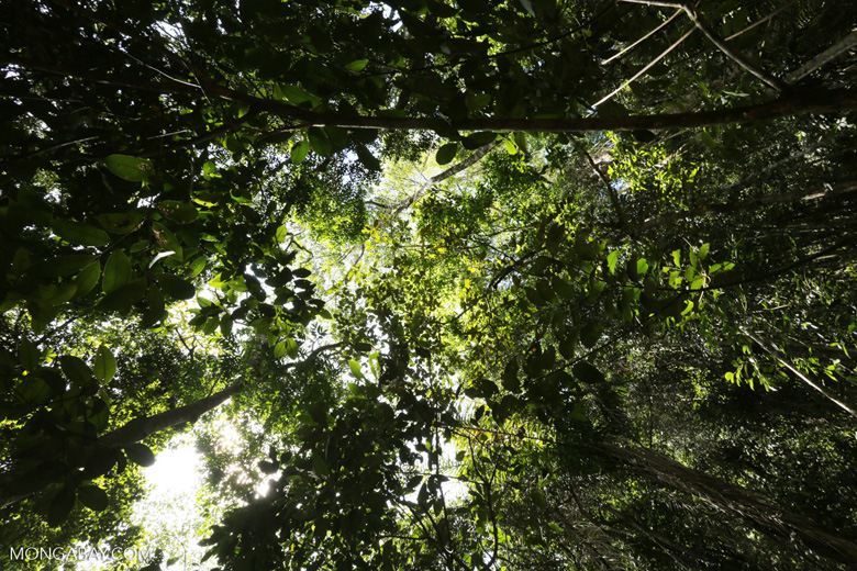 Rainforest on Saco do Mamanguá [brazil_154812]