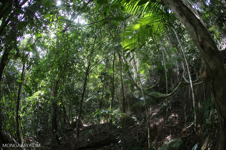 Brazil's Atlantic Forest [brazil_155121]