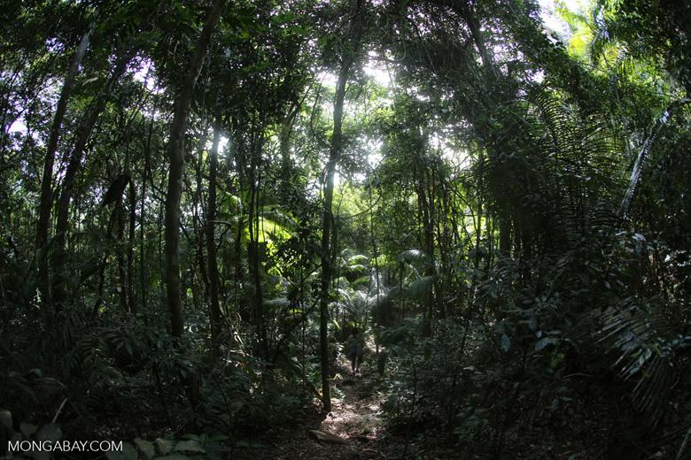 Brazil's Atlantic Forest [brazil_155131]