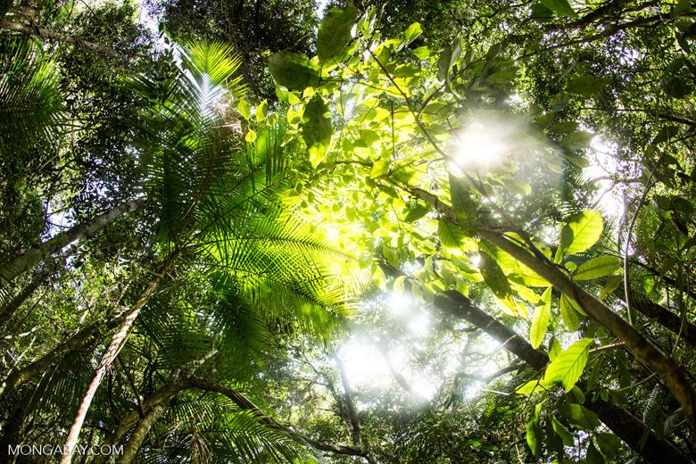 Brazil's Atlantic Forest [brazil_155136lr]