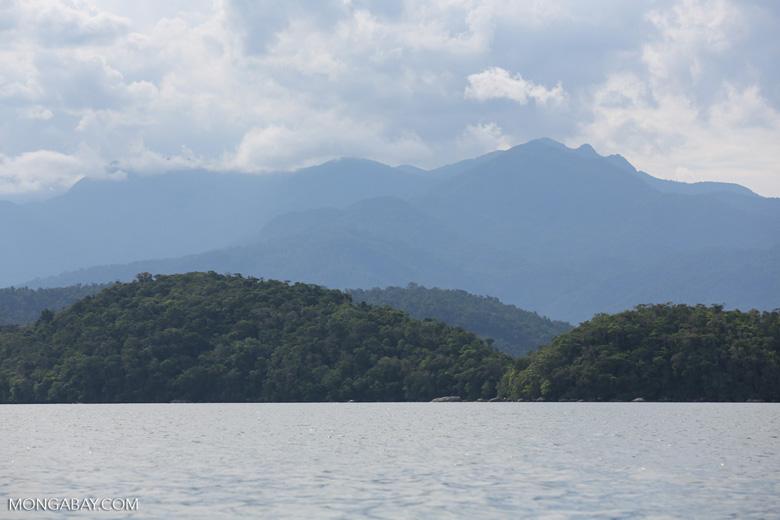 Where rainforest meets the sea [brazil_155187]