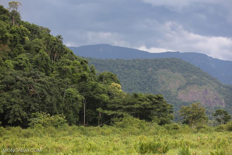 Edge of the Mata Atlantica forest [brazil_155221]