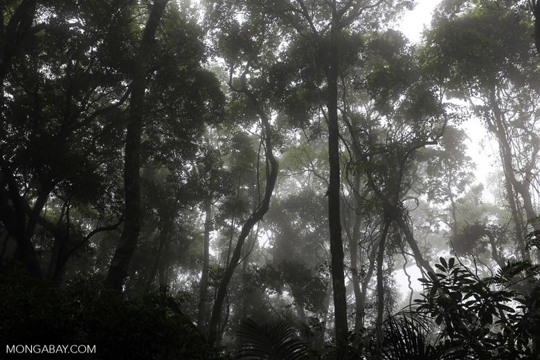 Tijuca Forest [brazil_155612]