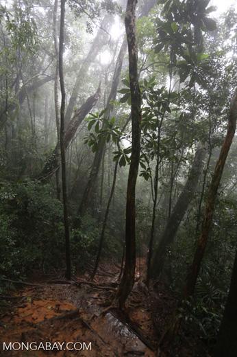 Trail up Pedra da Gávea