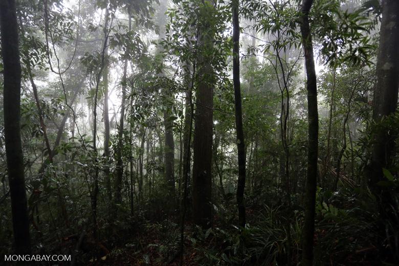 Tijuca Forest [brazil_155682]