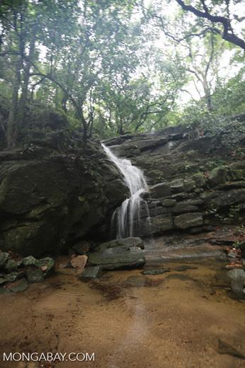 Waterfall in Tijuca Forest [brazil_155731]