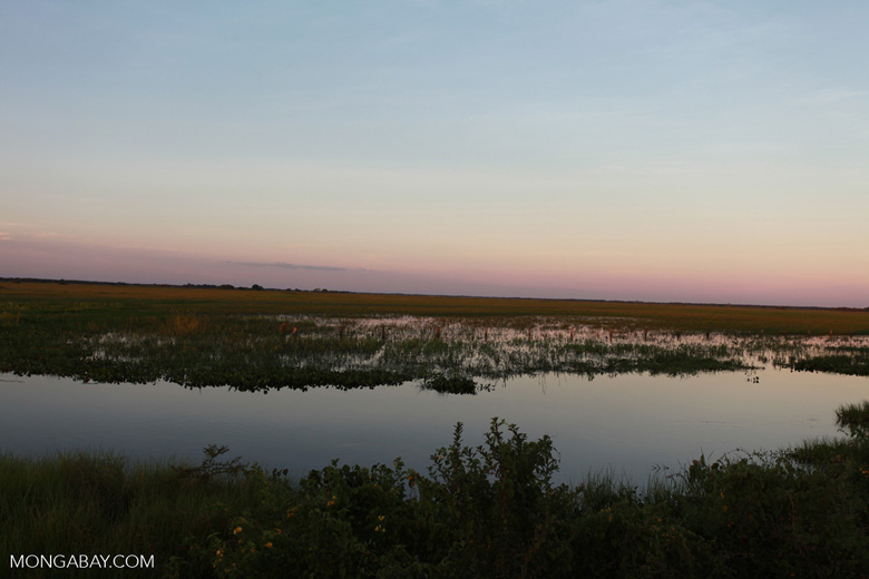 Pantanal at sunset