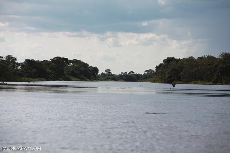 Cuiaba river [brazil_1834]