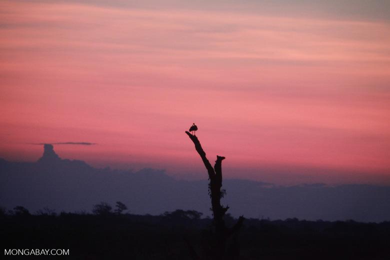 Sunset over the Pantanal [brazil_1923]