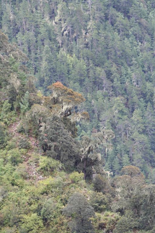Yunnan snub-nosed monkey habitat in Yunnan