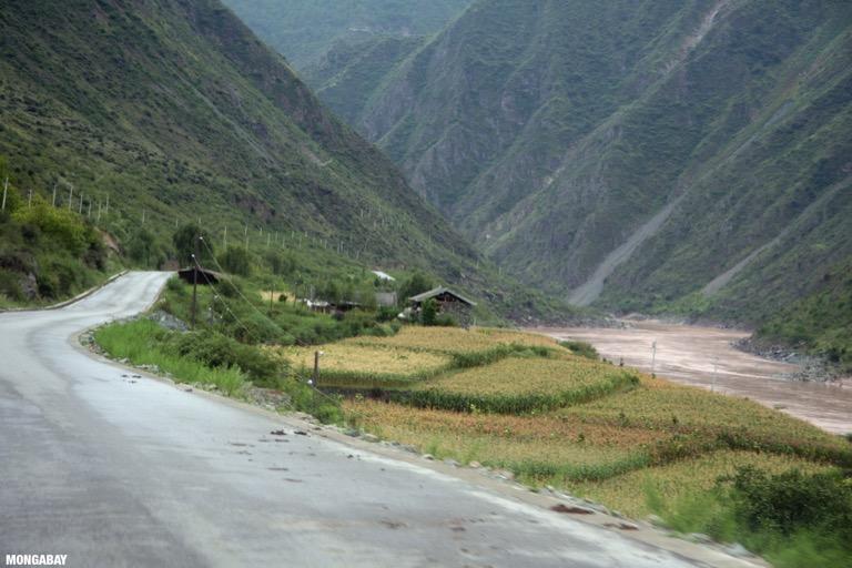 Corn field and home along the Yangtze