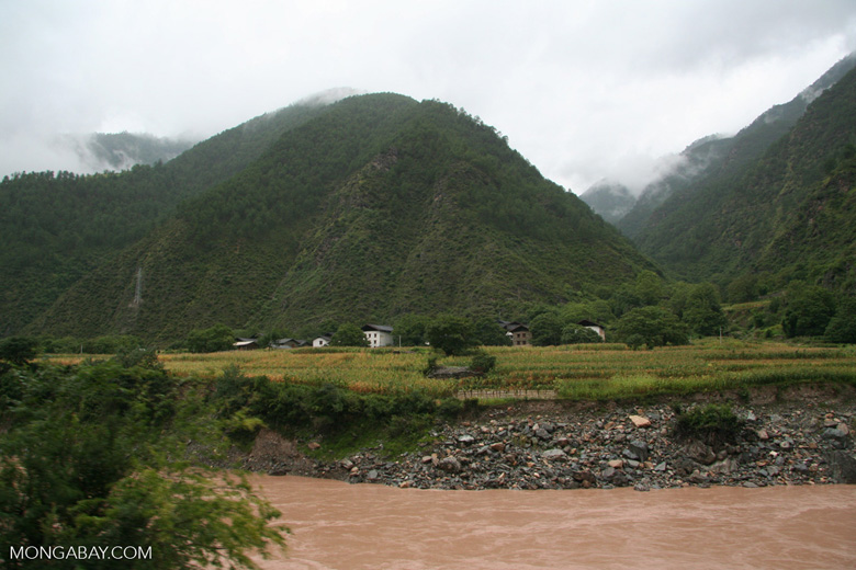 Homes among rice fields along the Yangtsi River