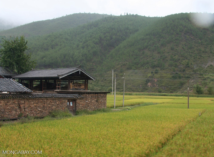 Village surrounded by mountains and rice paddies in Naxi territory