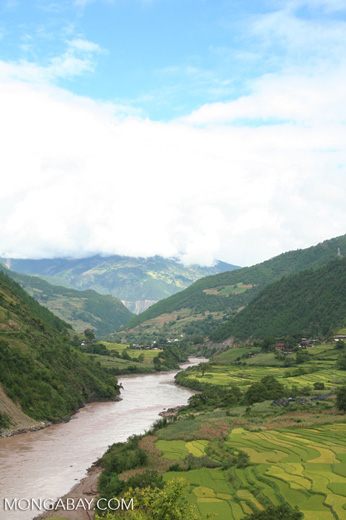 Rice fields in the upper MeKong River gorge in China