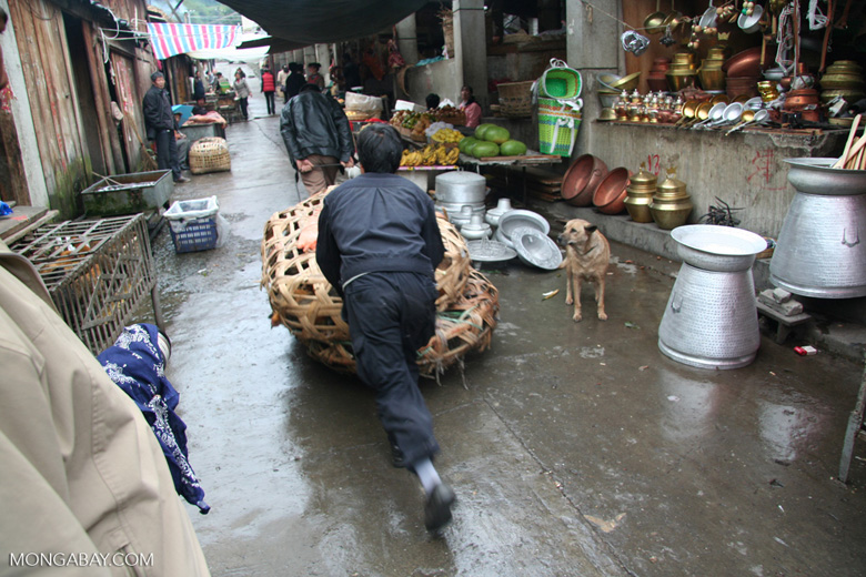 Man pushing a basket full of chickens at the market in Deqin