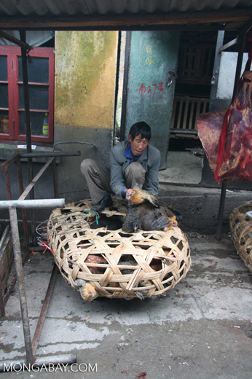 A chicken dealer in China